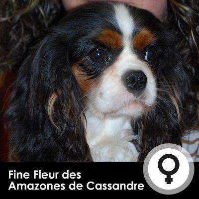 Fine-Fleur-des-Amazones-de-Cassandre